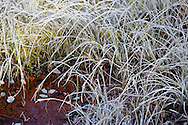 Hoarfrost forms on grasses at the edge of Reflection Lakes on clear autumn nights bringing the first sign of winter to Mount Rainier National Park, WA, USA