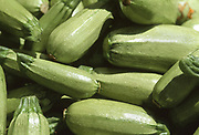 Close up selective focus photograph of a pile of Leida Zucchini in the sunlight