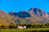 Dornier Wine Estate, near Stellenbosch, Cape Winelands, near Cape Town, South Africa.