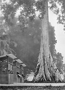 Camopi, Guyane, 2015.<br /> <br /> Bourg artificiel créé autour d'un arbre sacré pour regrouper les populations et faciliter l'implantation de l'administration française sur le Haut-Oyapock, Camopi se situe à présent à l'intérieur du tracé d'un parc national. <br /> <br /> En 1992 lors du premier Sommet de la Terre la France annonce sa volonté de créer un parc en Guyane. En février 1993, une mission d'étude se met en place. D'un caractère trop environnementaliste délaissant les populations, le premier projet est rejeté en 1995. Un second, élaboré entre 1998 et 2000 obtient l'adhésion des communautés locales, mais essuie le refus des collectivités territoriales. Un des points de blocage concerne l'accès aux ressources naturelles et leur exploitation. Finalement, le projet suivant est entériné en 2007 et officialise l'existence du Parc Amazonien de Guyane. <br /> <br /> Il englobe plus de 3 millions d'hectares compris dans le centre et la portion sud de la Guyane correspondant à la zone à accès réglementé. Avec une « zone de coeur » et une « zone de libre adhésion » qui concerne les communes de Maripasoula, Papaïchton, Saül, Saint-Elie et Camopi, c'est la plus grande zone protégée d'Europe.<br /> Ses missions sont celles des parcs nationaux français avec des adaptations liées aux contextes guyanais. Le PAG a pour but « de contribuer au développement des communautés d'habitants qui tirent traditionnellement leurs moyens de subsistance de la forêt, en prenant en compte leur mode de vie traditionnel et de participer à un ensemble de réalisations et d'améliorations d'ordre social, économique et culturel dans le cadre du projet de développement durable défini par la charte du parc national ». La loi veut que les acteurs du territoire soient associés à l'administration du Parc et que les autorités coutumières soient représentées au conseil d'administration.<br /> <br /> Concrètement, le ara et le singe atèle sont protégés, la chasse devient réglementée et la culture traditi