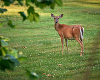 Doe.  Image taken with a Leica SL2 camera and 90-280 mm lens