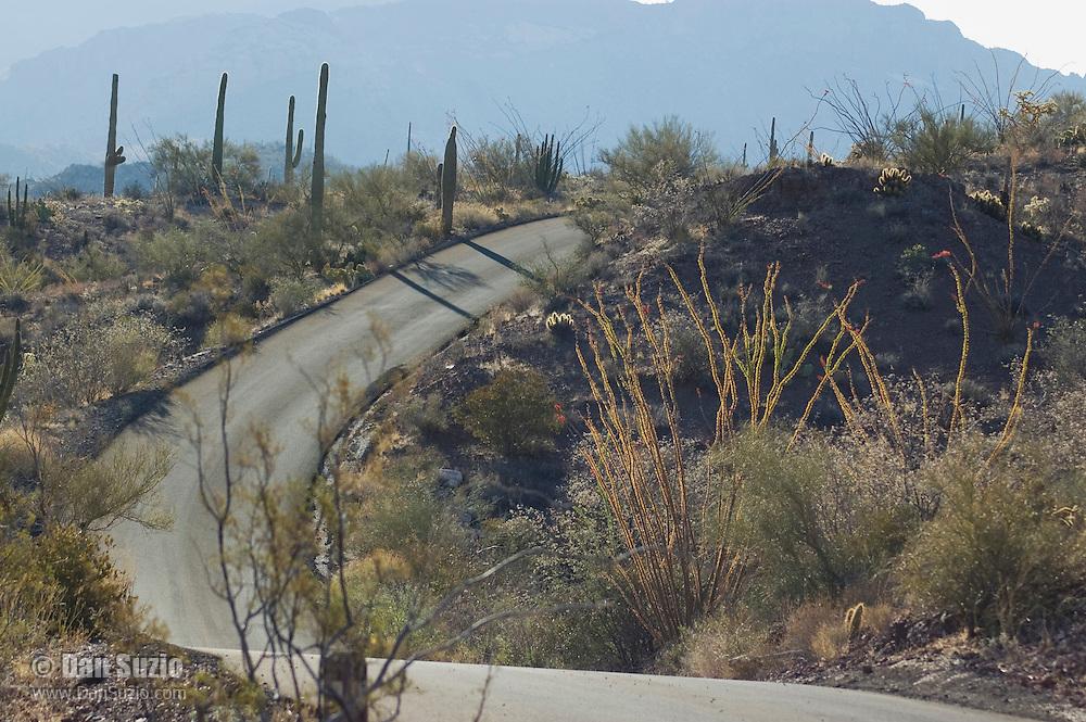 Ajo Mountain Drive, Organ Pipe Cactus National Monument, Arizona.