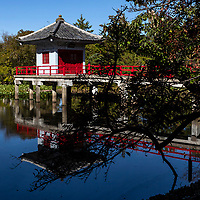 """Kogen-in is a part of Teramachi """"temple town"""" in Karasuyama,where a variety of Buddhist sects are represented, and one temple, Senkoji, sequesters the grave site of world-renownedukiyo-eartist Kitagawa Utamaro. The hushed area is rare in Tokyo. Of all the temples in Teramachi, Kogen-in is the most impressive, graced with a carp pond and pavilion on its lotus pond.  The temple is devoted to Arima Yorimoto who converted to Buddhism and built a temple in Shinagawa. Ikei, the first priest of the temple, mastered the tea ceremony and moved the temple to Teramachi Karasuyama in 1926.  There is a small pavilion built in the middle of Benten-ike Pond Ukigodo, which enshrines Hosho Benzaiten."""