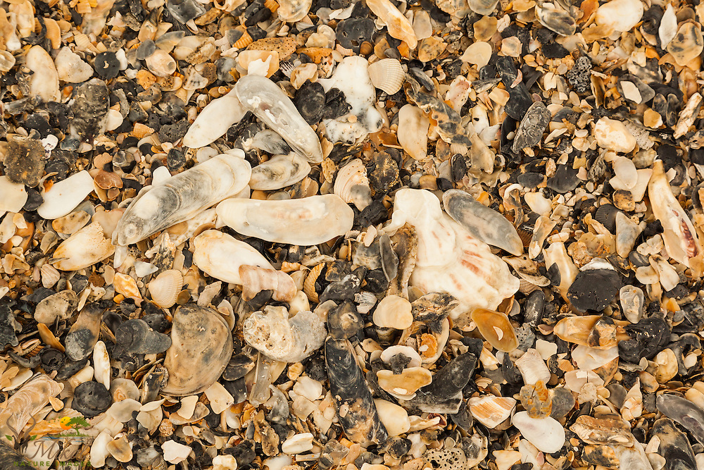 Collection of broken shells on beach at Botany Bay, SC