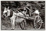 A farmer with his donkey and dog wait at Ballyhar gates for the Tralee to Killarney to pass before proceeding to the creamery in 1982..Picture by Don MacMonagle