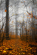 Forest on a misty fall morning