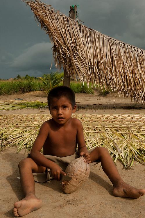 Palm Leaves for Roof Thatch<br /> Katoka Amerindian Village<br /> Rupununi<br /> GUYANA<br /> South America