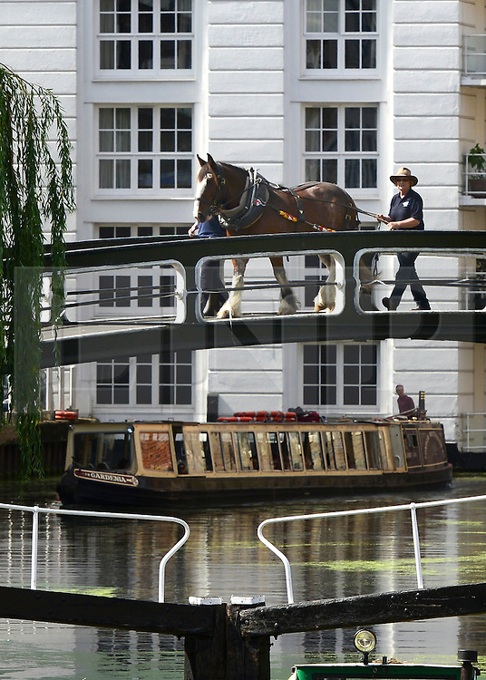 © Licensed to London News Pictures. 23/08/2012. London, UK .  A diagonal bridge across the canal at Camden locks that was built as a horse bridge enables Buddy to cross whilst the narrowboat is hand lulled throughout the lock system. lkeston, a restored narrowboat, is towed by a horse, Buddy, a 13-year-old Clydesdale, across London's canal network, on its way to the London Canal Museum. It has journeyed from Ellesmere Port in Cheshire, through more than 100 locks, to London to celebrate its 100th birthday.. Photo credit : Stephen Simpson/LNP