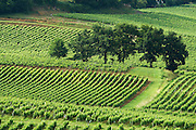 vineyard chateau gudeau saint emilion bordeaux france