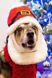 Here comes Santa Claus, here comes Santa Claus, right down Santa Claus Lane<br /> <br />  17  December 2018<br />  Copyright Paul David Drabble<br />  www.pauldaviddrabble.co.uk