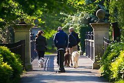 Dog walkers enjoy the sunshine as a beautiful morning greets Londoners in Regents Park. London, May 09 2018.
