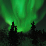 Northern Lights shine brightly over the Black Spruce trees in Wapusk National Park in temperatures of -46 F. Canada