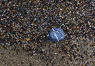 Details from a walk on the beaches of Sonoma County, California
