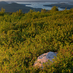 Lowbush blueberries grow in this hilltop field in Alton, New Hampshire.