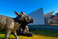 "Sculpture ""Scottish Angus Cow and Calf"" by Dan Ostermiller with the Frederic C. Hamilton Building of the Denver Art Museum (designed by Daniel Libeskind) behind, Civic Center Cultural Complex, Denver, Colorado USA"