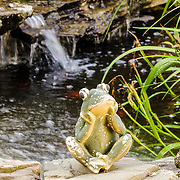 It's early morning and Mr. Frog is sitting by the pond contemplating the day ahead