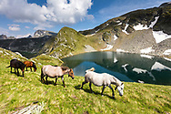Herd of horses in the mountain passing by a lake