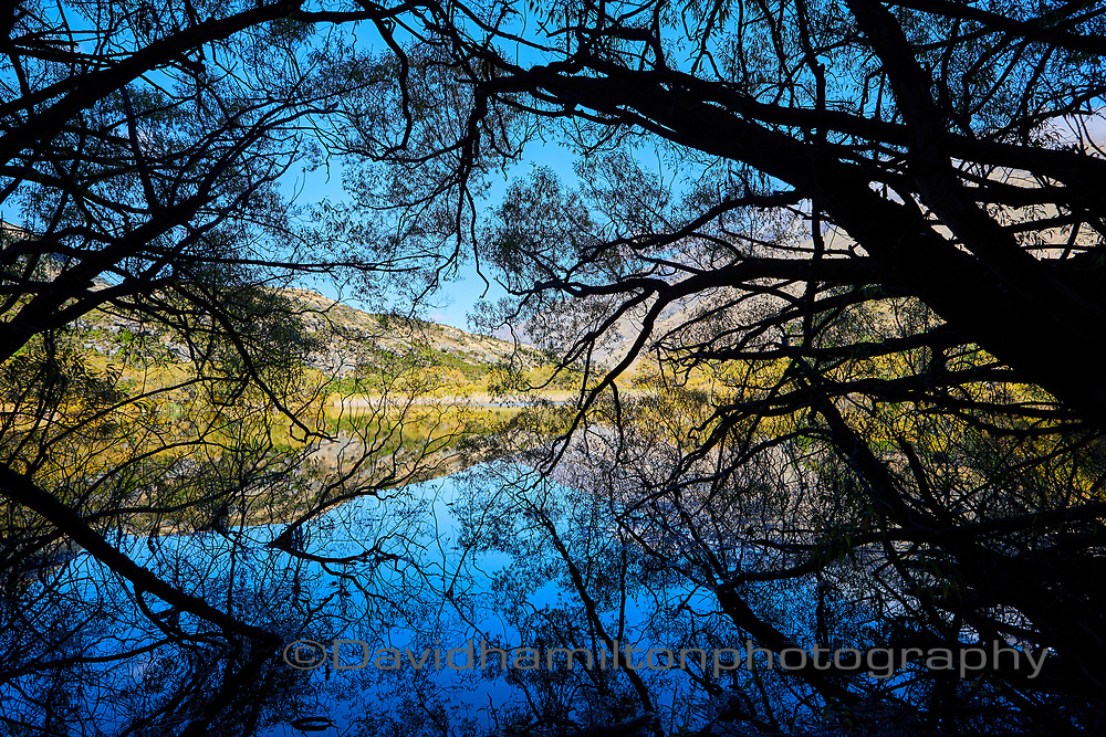 Lake through trees