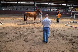 19, Lady Gunner<br /> Stamboek keuring KWPN Turnhout 2020<br /> 19, Lady Gunner<br /> 18/07/2020