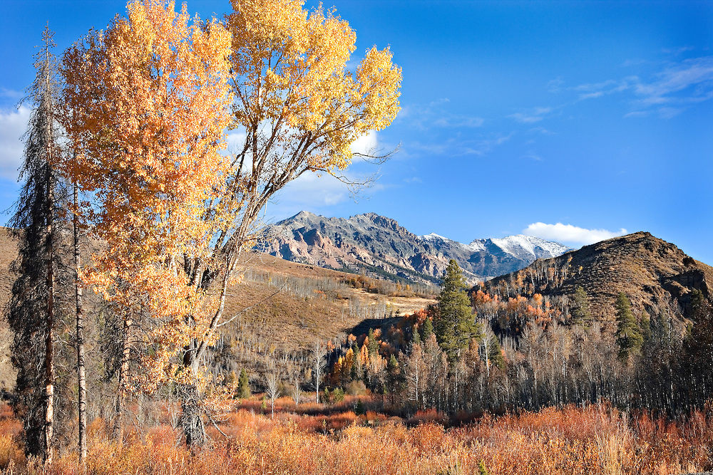 Sun Valley in autumn and Boulder Mountain, ID