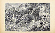 Struck to the Ground by the Beast in its spring a Lion attacks an European explorer From the book ' David Livingstone ' by Brice, A. H. M. (Arthur Hallam Montefiore), 1859-1927 Published by United Brethren Pub. House, Dayton, Ohio in 1880