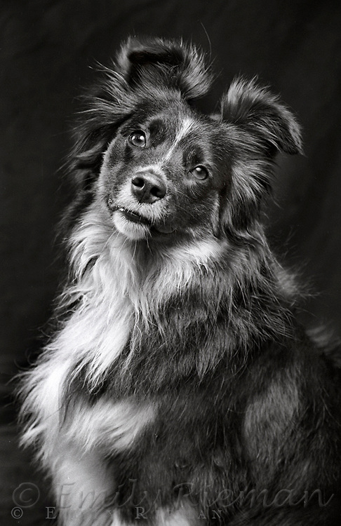 Portrait of a dog shot on black and white film.