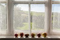 Apples on a window sill, Kerry, Ireland. Pommes murissant sur un rebord de fenêtre, Irlande.