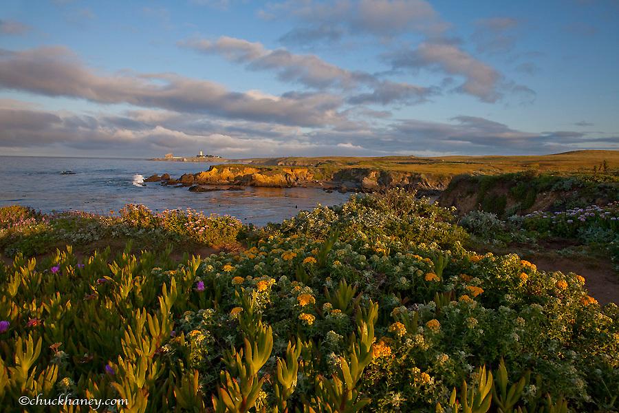 Piedras Blancas Lighthouse on the Big Sur Coastline, California, USA