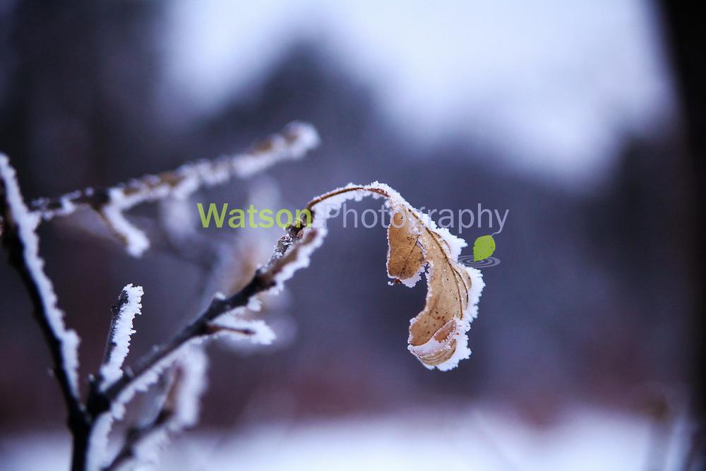 Leaf it to Winter