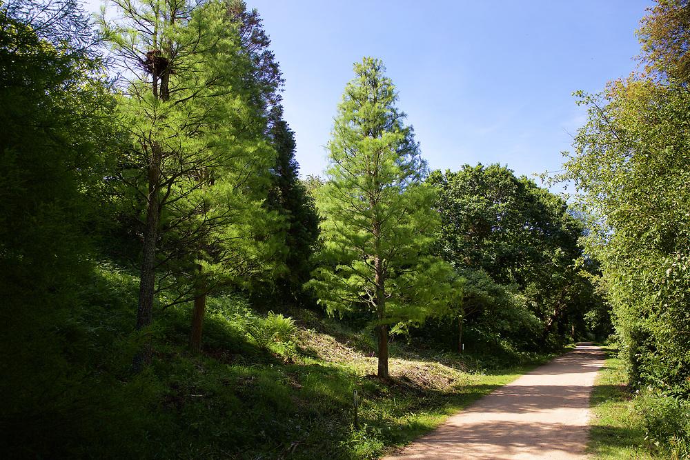 Walking track through the trees at Val de la Mar Reservoir, St ouen, Jersey