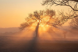 © Licensed to London News Pictures. 07/02/2020. London, UK. Calm before the storm. The sun rises through the frost and mist in Richmond Park this morning as weather experts predict stormy weather with high winds and heavy rain for the weekend. Photo credit: Alex Lentati/LNP