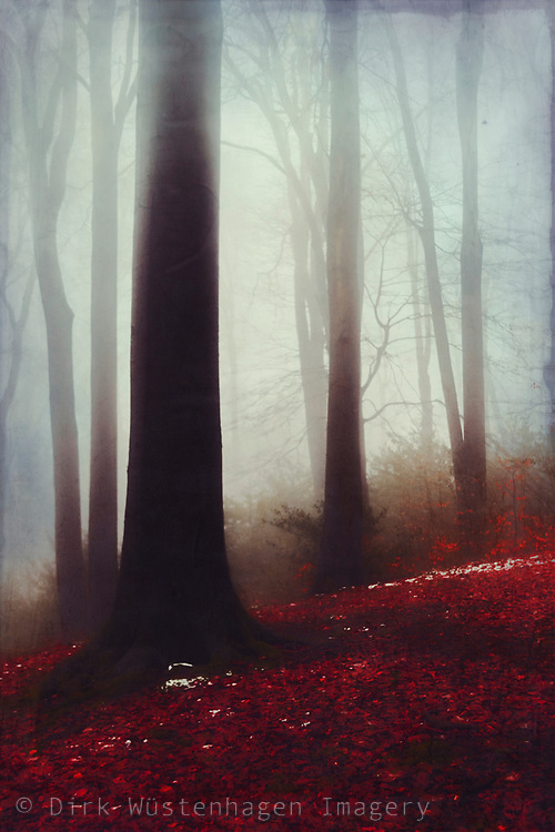 Forest on a misty morning