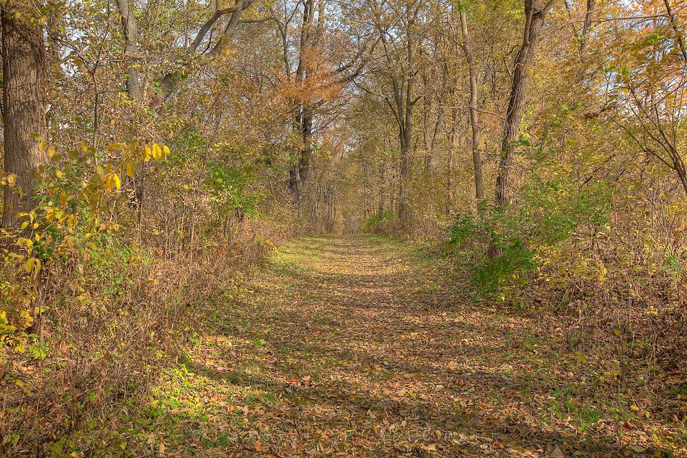 Fallen Leaves carpet a nature trail at Scott County Park in southeast Iowa.