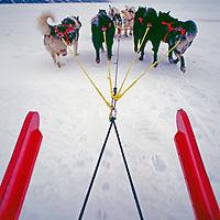 A dog team pulls a sled across the frozen Arctic Ocean near Tuktoyaktuk.