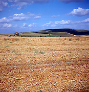 Wheat harvest chalk downland near Marlborough, Wiltshire, England
