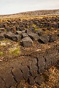 Peat quarry with cut blocks drying, Long Island farm, Falkland Islands.
