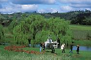 Helicopter landing at Greenwood Ridge Vineyards, near Philo, Mendocino County, California