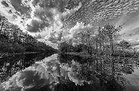 Everglades Gallery Big Cypress Gallery, Johnbobcarlos, Johnbob, Everglades , Gladesman, Big Cypress, Fl Florida photography