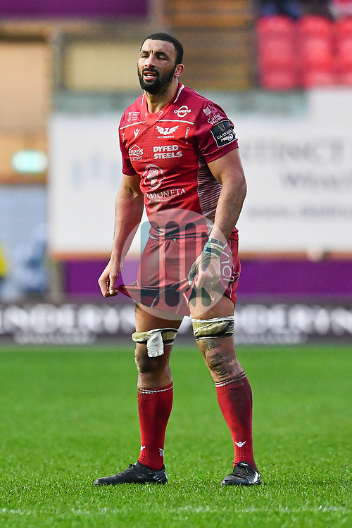 Uzair Cassiem of Scarlets<br /> <br /> Photographer Craig Thomas/Replay Images<br /> <br /> Guinness PRO14 Round 11 - Scarlets v Edinburgh - Saturday 15th February 2020 - Parc y Scarlets - Llanelli<br /> <br /> World Copyright © Replay Images . All rights reserved. info@replayimages.co.uk - http://replayimages.co.uk