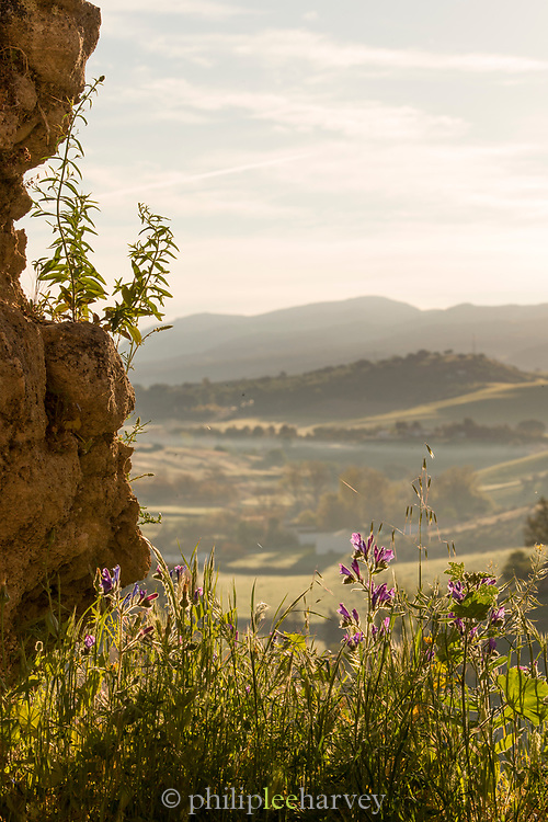 View of rolling landscape with flowers in foreground, Ronda, Andalusia, Spain