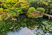 """Chokenji Temple Pond Garden - though the garden and its teahouse have fallen in disrepair, and is not well maintained it remains one of the most pleasant Japanese gardens in Matsuyama, which has very few.  Sadly, Chokeni is better known as the temple with an infamous monk, Yoshinori Kurumi, who killed a prostitute for rendering """"poor service"""" to him."""