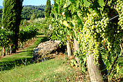 Rural landscape and vineyard at Rocca d'Orcia Tuscany, Italy