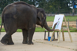 © Licensed to London News Pictures. 20/09/2011. Dunstable, UK. KARISHMA the 13-year-old female elephant who has taken to painting in her spare time at Whipsnade Zoo, in Dunstable, Bedfordshire. Photo credit: Ben Cawthra/LNP