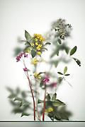 various twigs of  flowering plants