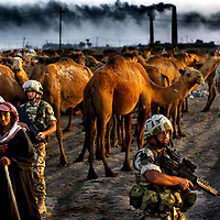 British troops stop a camel train in Northern Iraq as they patrol the area.Picture David Cheskin.Sept 2003.(Photographer pf the year)