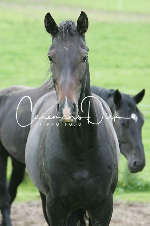 Paarden 2005<br /> Copyright Hippo Foto