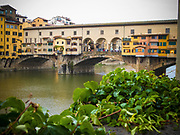 The Ponte Vecchio over the Arno river with shrubs in the foreground, Florence