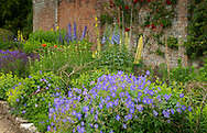 Hardy geranium, Delphinium and Lupinus in the Herbaceous Border at Waterperry Gardens, Waterperry, Wheatley, Oxfordshire, UK