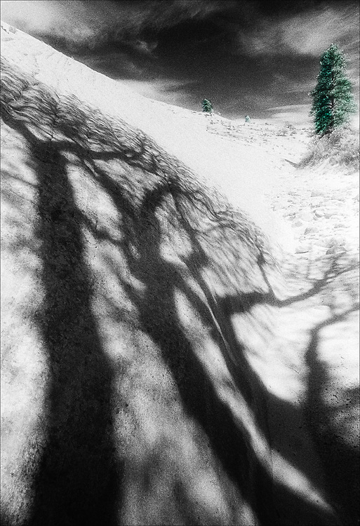 Cottonwood tree shadows cast over  sandstone, selectively colored black and white infared, Zion National Park, Utah, USA
