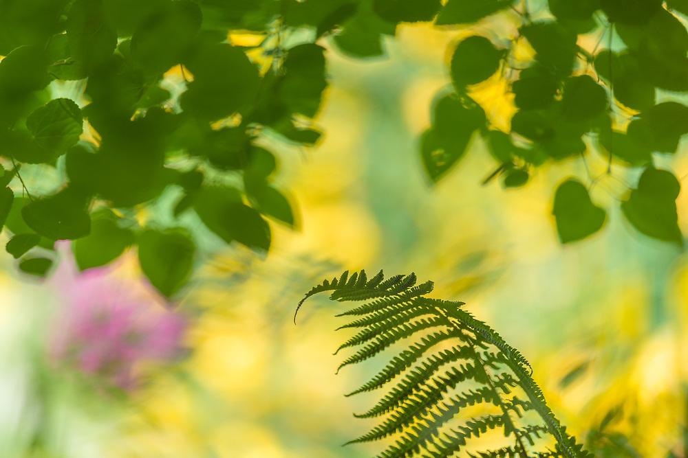 Bellevue Botanical Garden, summer, Bellevue, Washington, USA